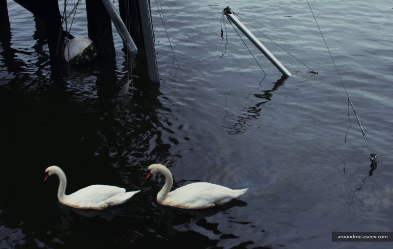 Hurricane Sandy: Two Swans and a Yacht