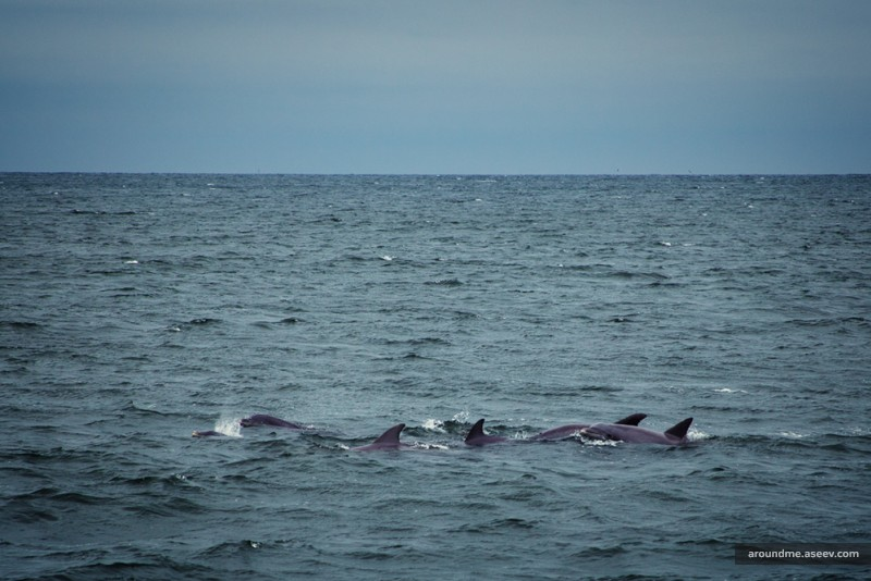 Dolphins, Breezy Point Tip, NY
