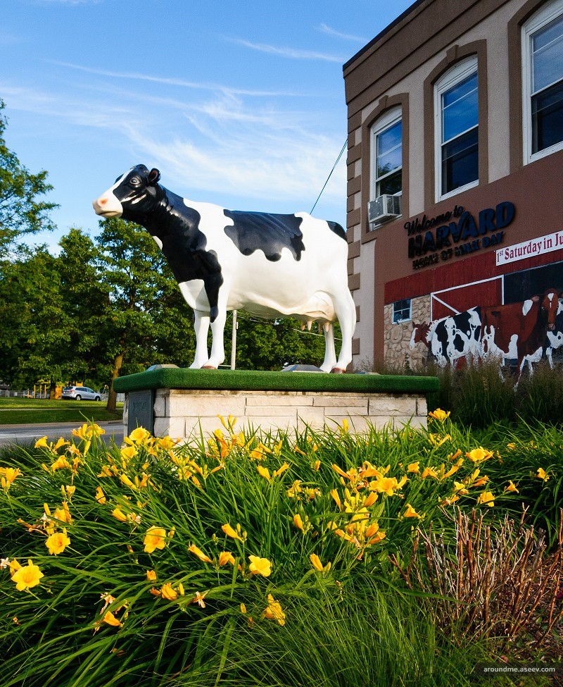 Harmilda the Cow, Harvard, IL
