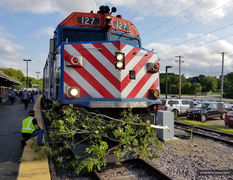 Union Pacific Northwest Train Hits a Tree on Tracks