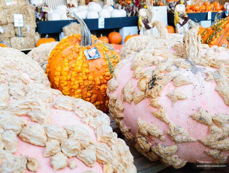Odd-looking Pumpkins at the Home Depot